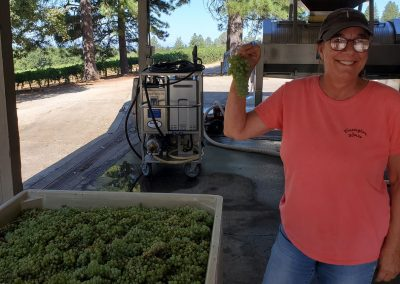 Sierra Vista Event Room - Harvesting Grapes