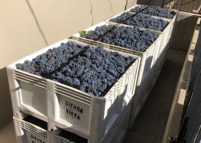 Sierra Vista Event Room - Harvesting Wine Grapes