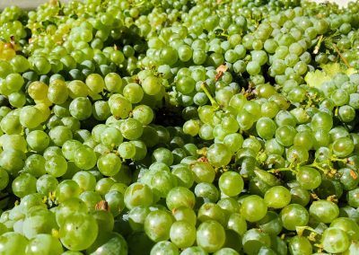 Sierra Vista Event Room - White Wine Grapes