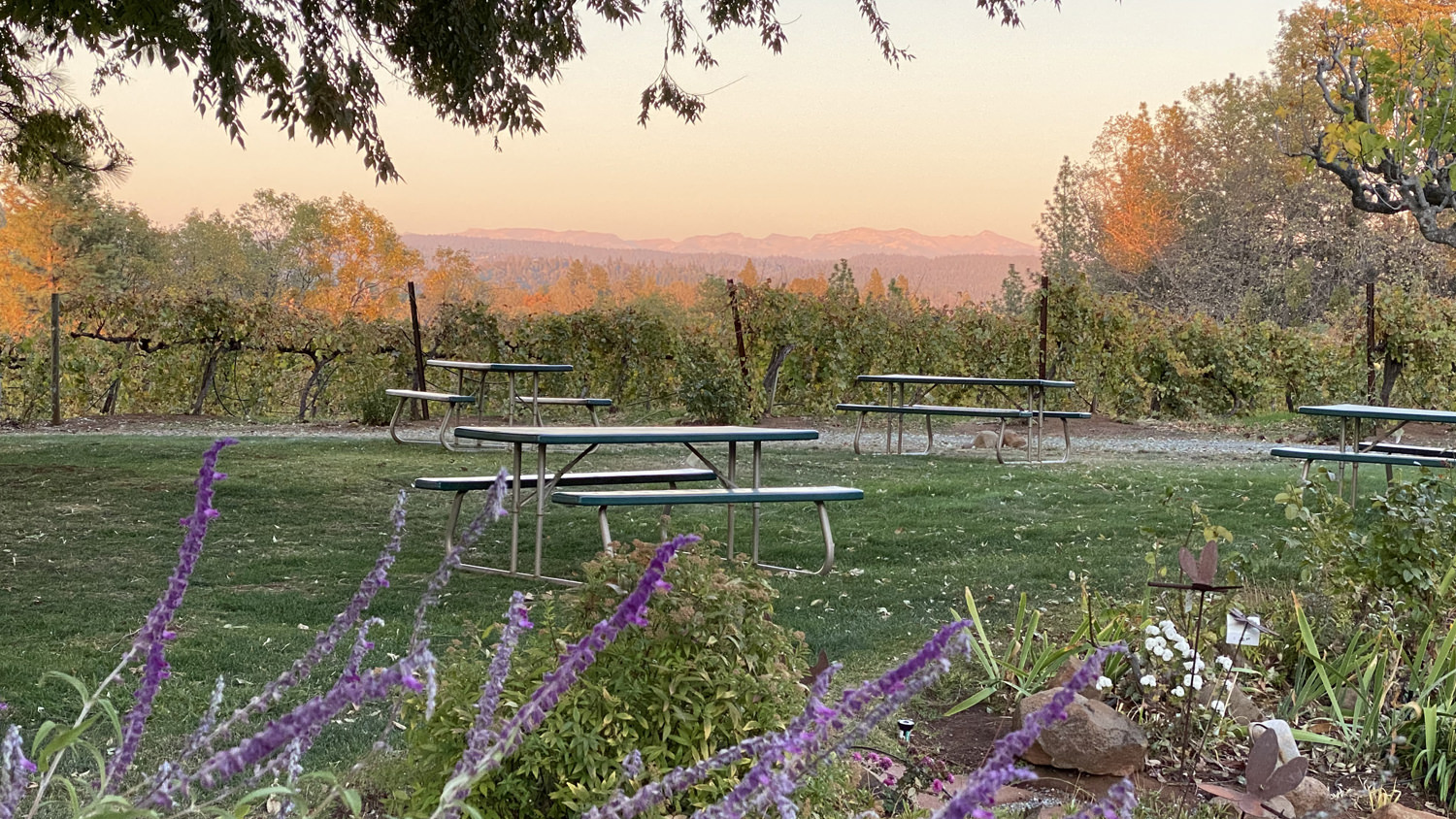 Sierra Vista Tasting Room Outside Picnic Area View
