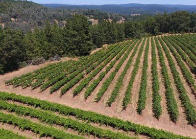 Sierra Vista Vineyards and Winery - Drone Picture of Vineyards